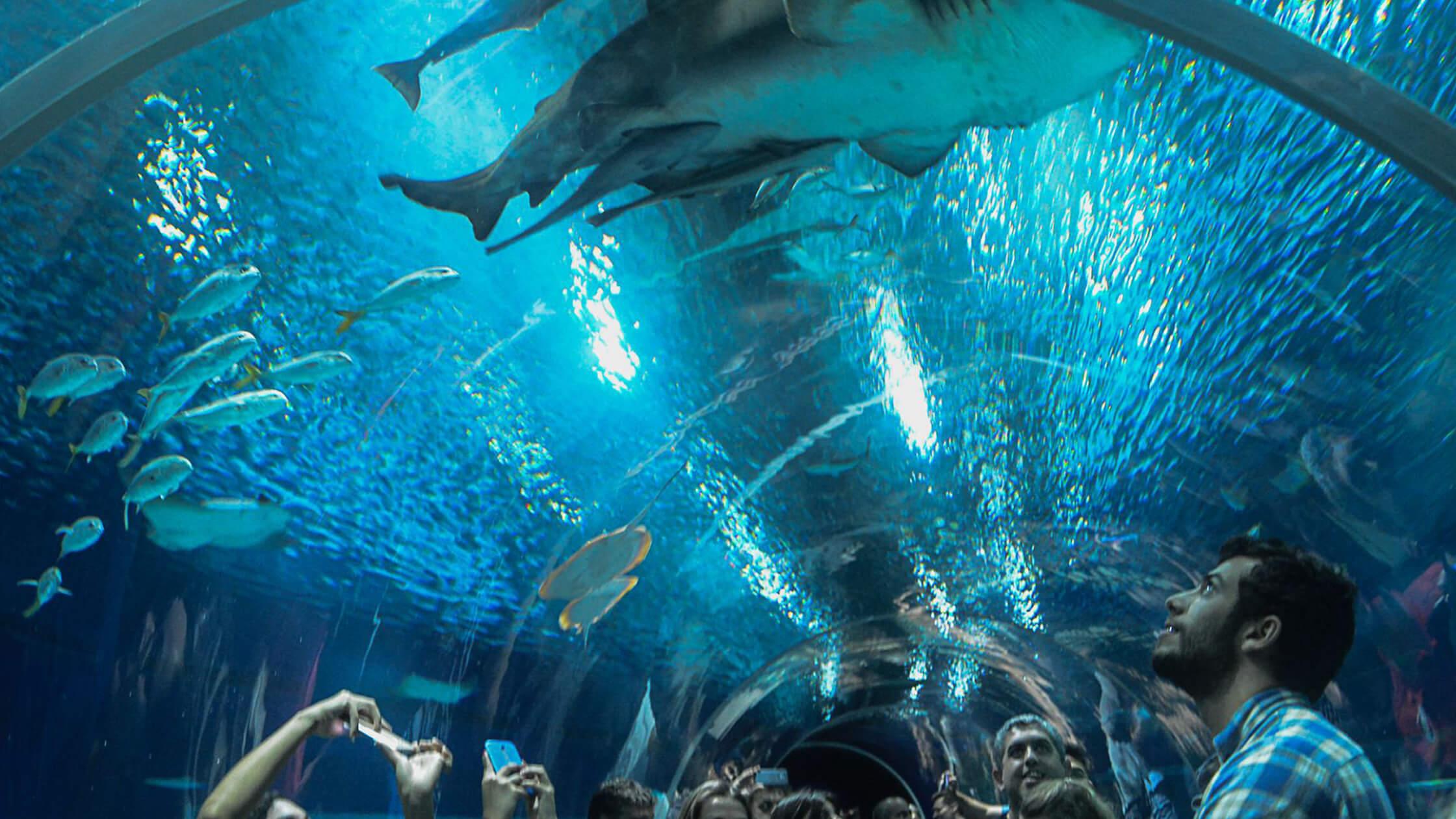 Grupo Cataratas anuncia construção de aquário inédito em Foz do Iguaçu