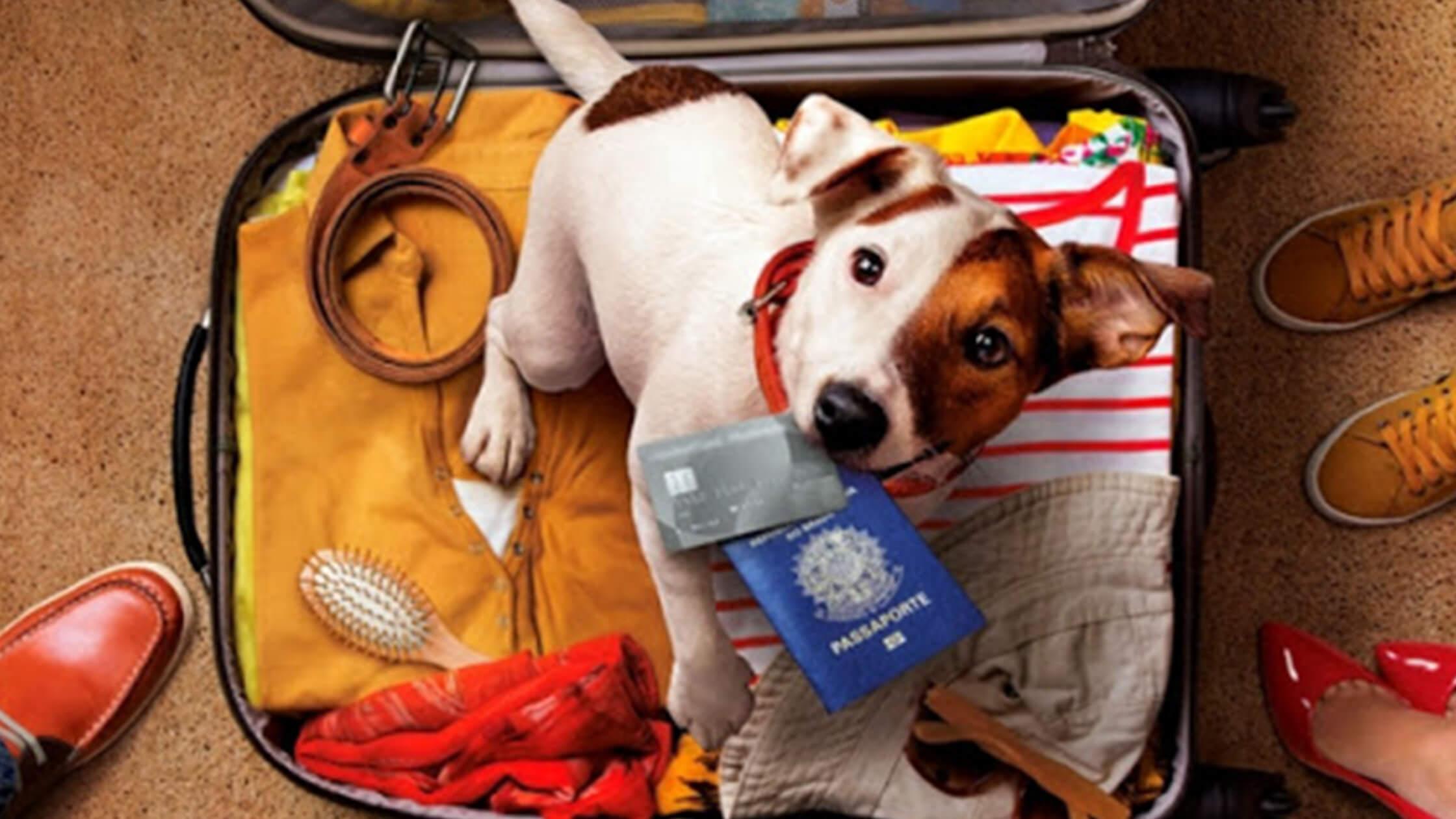 Hotéis Hard Rock All Inclusive permitem até dois animais por quarto