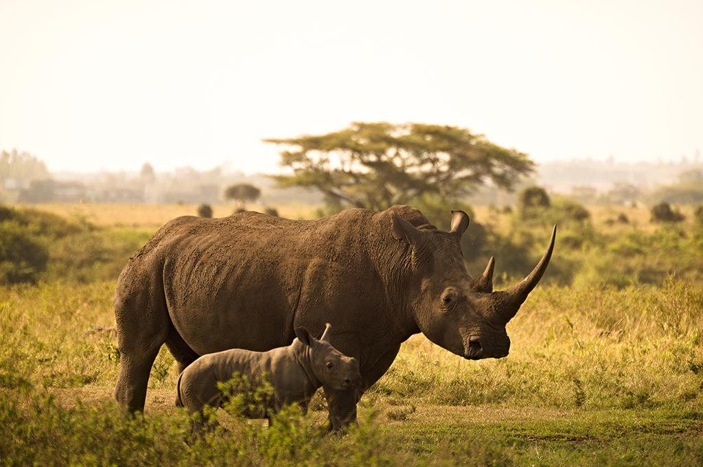 africa-safári
