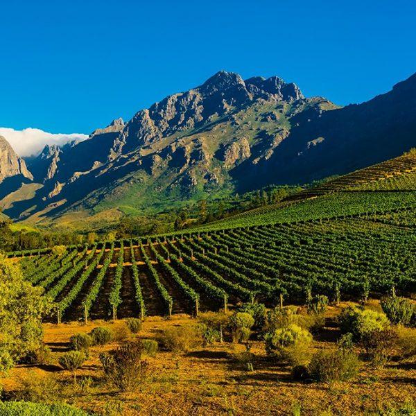 Stellenbosch-Cabernet