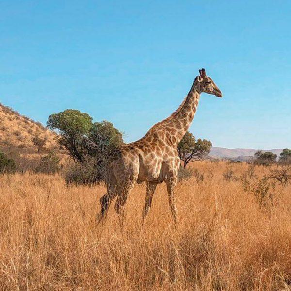 Região de Kruger e Cape Town